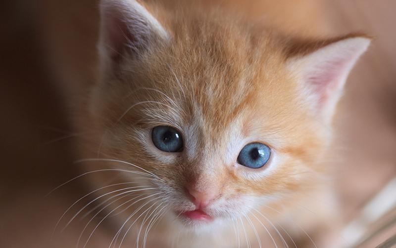 Гладить ицеловать кошек может быть крайне опасно для жизни— сообщили ученые