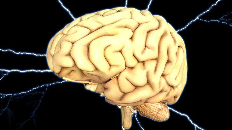 Ученые поведали, как голод влияет наработу мозга