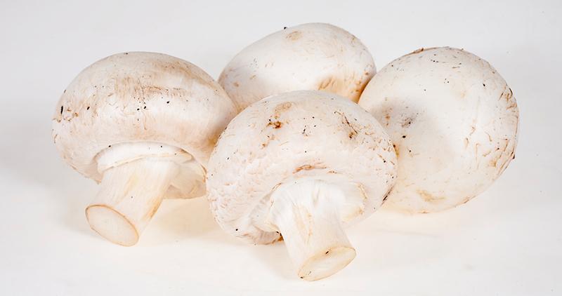 Ученые: грибы всостоянии защитить отболезни Альцгеймера