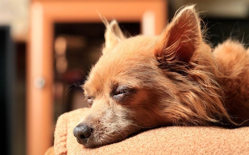 Женщины крепче спят с собаками, чем с кошками или людьми
