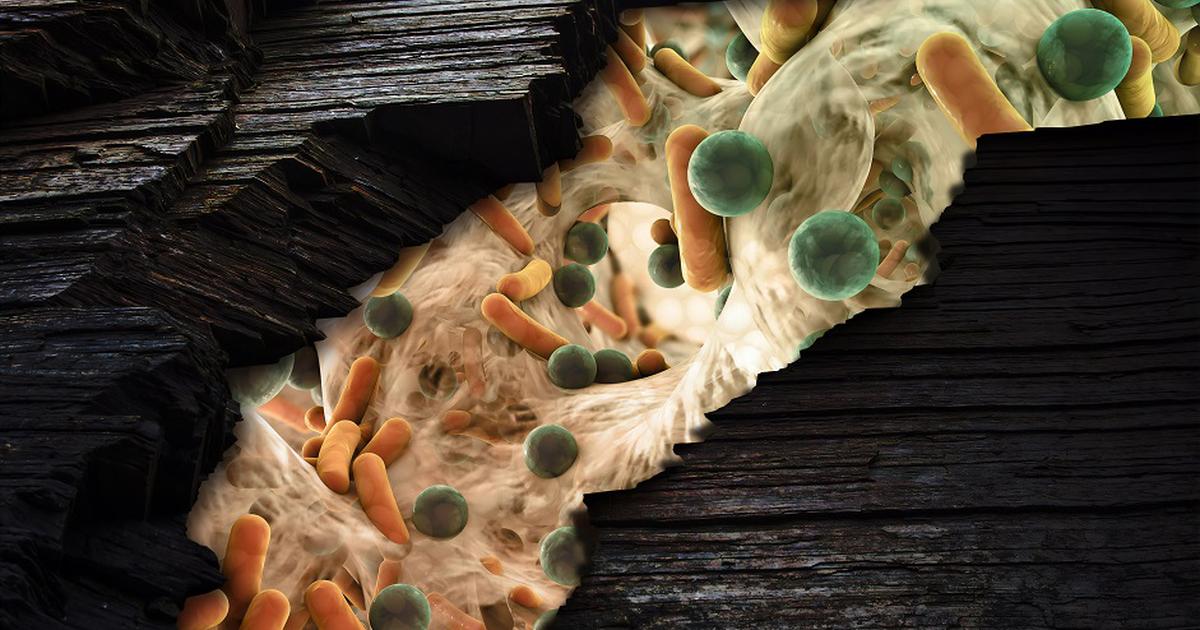 Побороть супермикроб помогут антибиотики двойного действия